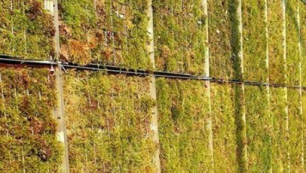 Voor het eerst bij een bouwproject in Nederland zijn er mosschermen toegepast om fijnstof af te vangen